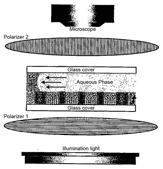 A schematic view of a microscope arrangement for detecting optical birefringence of the liquid crystal within the microfluidic device.