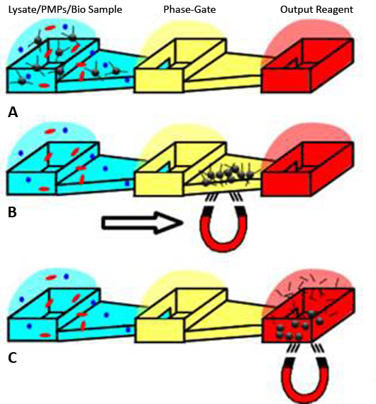 The PMPs bind to the nucleic acids (A). The magnetic field draws the nucleic acid/PMP particles through the phase-gate isolation buffer and into the output well (B). The nucleic acids and PMPs are collected (C).